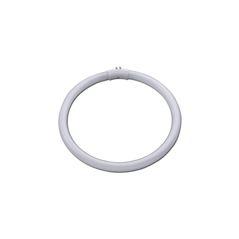 Circline spéciale plate, 22w